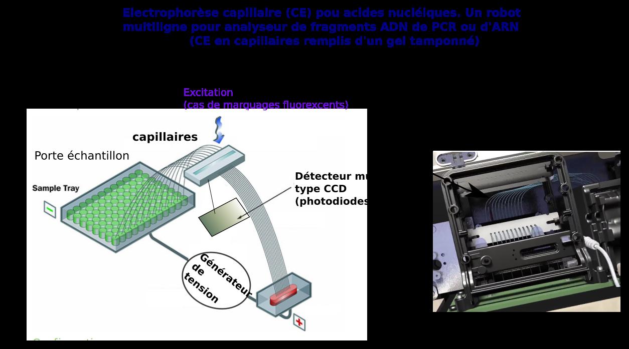 Séquençage des acides nucléiques - Maillet-Baron